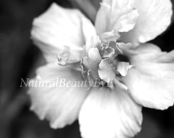 Black and white flower print, fine art photography, flower photography, nature photography, garden, nature, print, floral wall art, fine art
