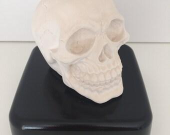 Create your own custom skull, hand cast