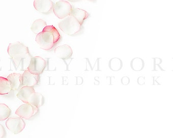 Styled Pink Rose Petals | Floral Styled Stock Image | Styled Stock Photography