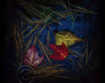 Fallen Leaves, fall,leaves,color,photo,photo art,nature,gift,Home Decor,Home Decor Office,Wall Picture,Vertical
