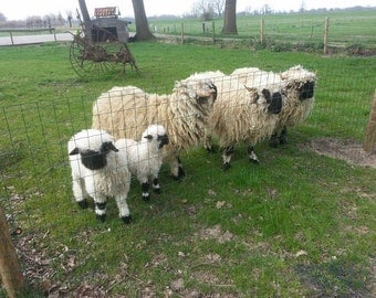 Pure and raw wool from Walliser Schwartznase sheep and lamb