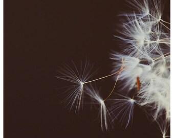 Nature Photography  - Dandelion - Hidden Stories -  Fine Art Photograph - Floral Art - Purple - Minimalist - Oversized Art - Alicia Bock
