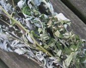 MUGWORT  naturally DRiED FLOWER and Herb Bunches