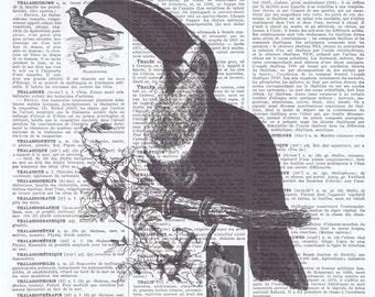 Tucan.tropical Bird illustration,Antique French Book Page print.Vintage.retro.Birthday.get 1 free.mixed media.deco.nursery.child,art.avian