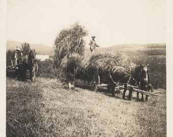 vintage photo 1909 Men Hidden Worker Harvesting Hay WAgon horses Americana Farm Photo