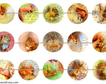 Squirrel Pins, Squirrel Magnets, Squirrel Flatback, Squirrel Party Favors, Squirrel Badges, 12 ct Set