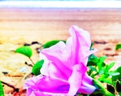 Purple Flower Photo 5x5 Beach Photograph, Beach Flower Print, Coastal Photography, Summer Decor, Lilac Flower Photography, Nature Photo