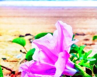 Purple Flower Photo 5x5 Beach Photograph, Beach Flower Print, Coastal Photography, Summer Decor, Lilac Flower Photography, Nature Photo