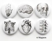 Human Anatomy teacher gift MAGNETS brain skull anatomical heart vertebrae body geekery pins stocking stuffer brain party favors medical goth