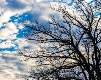 """Silhouette Tree in Winter-  5 x 7""""  Photographic Print"""