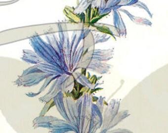 Vintage Illustration Flower Digital Download Printable Clip Art Wildflower Botanical Art