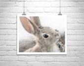 Bunny Picture, Rabbit Photograph, Photo Print, Wildlife Art, Nature Photography, Cottontail, Arizona, Cute Animals, Nature Art, Mammals