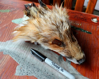 CRAFT QUALITY shaped red fox face for crafts, taxidermy practice, display, more DESTASH
