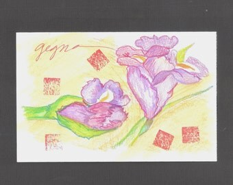 A Study in Irises in Colored Pencil