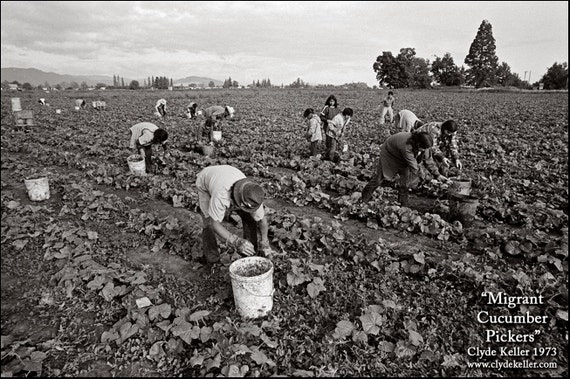 MIGRANT CUCUMBER PICKERS, Washington County, Clyde Keller photo, 1973, Fine Art Print, Black and White, Signed