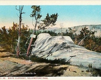 Yellowstone National Park Vintage Postcard - White Elephant Back Terrace (Unused)