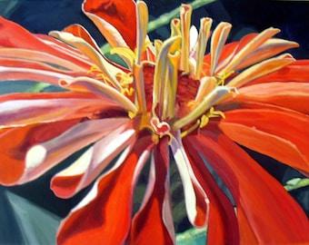 Zinnia l'Orange 5x7 art card