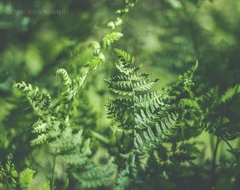 Fern Photography, Nature Photography, 8x10, Botanical Print, Fern Print, Fern Photo, Green Art, Dreamy Photography, Nature Art, 8x10 Print