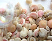"Beach Wedding Decor Tiny Pink Seashells - Nautical Decor Small Pink Shells - Pink Umbonium Sea Shells - Beach Wedding Shells - 3x4"" bag"