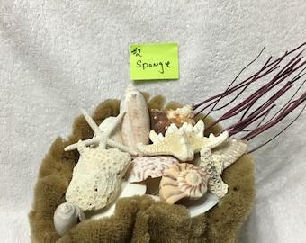 Seashells and Sea fan in Natural Sponge Vase Beach Decor