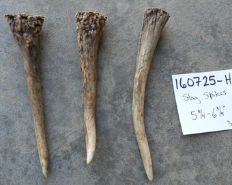 3 Small Red Stag Antler Spikes- Lot No. 160725-H