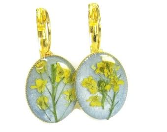 Yellow Alyssum, Lever-back Earrings,  Pressed Flower Jewelry, Real Flowers, Resin, (1802)