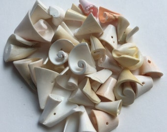 Assorted Drilled Shell Pieces - 30 Pieces