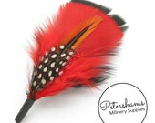 Men's Red on Black Hat Feathers Millinery Mount (Turkey, Hackle and Spotted Guinea Feathers)