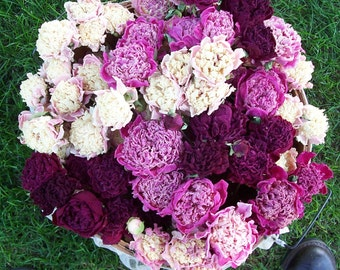 Dried Peonies - Mixed Colors - 2016