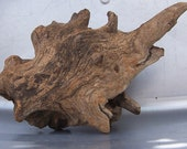 Natural Wood Tree Knot or Root for Art Sculpture, Crafting or Home Decorating