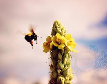 Drunk On Pollen Photographic print