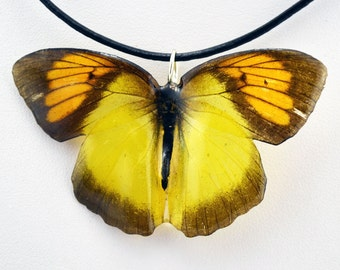 Real Butterfly Necklace - Little Yellow Orange Tip - Hand Cast Resin