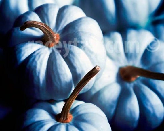 Blue Pumpkins- Pumpkin Decor- Rustic Thanksgiving Art Kitchen in Teal Blue & Brown - Food Photography