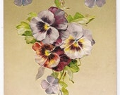 John Winsch - Happy New Year Greetings - Antique Postcard - New Year Postcards, Happy New Year, Pansy, Pansies, New Year Postcards