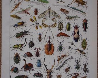 Large Color Vintage Lithograph Book Print ''INSECTES'' (Insects) 1931 by Vignerot Demoulin from the Nouveau Larousse Illustré