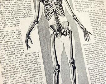 Standing Skeleton Vintage Book Plate Wonders of Living Things 1943 Metro Publications Perfect for Framing