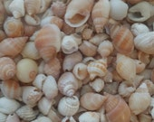 Mini Shell Mix with Rose, Orange & White Shells Coastal Shell Supplies for Crafts, Jewelry making, candle craft, weddings, white seashell
