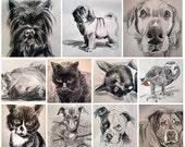 Custom Hand-Drawn Pet Portraits