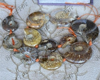 Single Ammonite stone loose strand ,Ammonite Fossil stone, Nautilus Fossil Spiral loose strands