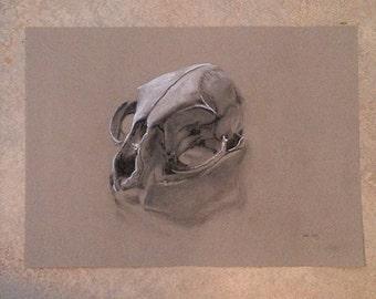 Original sketch/drawing of a cat skull