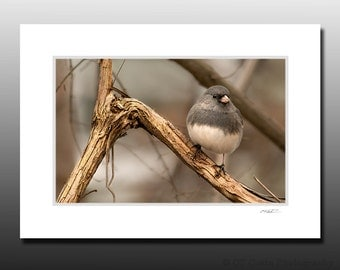 Gray Junco Bird Photography Matted Print, Small Bird Wall Art, Avian enthusiast gift idea, Ready for Framing, Fits 5x7 inch Frame