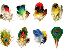 "Large Stickers (each sticker 2.5""x3.5"", pack 8 stickers) Scrapbooking Craft Vintage # Feather Birds Peacock FLONZ 101"