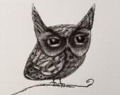 Little Owl 5x7 matte print