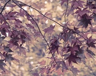 Autumn Leaves, Nature Photography, Fine Art Prints, Leaf Wall Art, Natural Home Decor, Changing Seasons, Branches, Trees, Plum