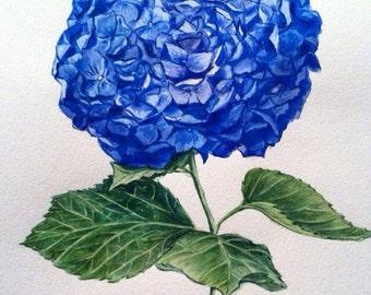 "watercolor botanical illustration ""Hydrangea"""