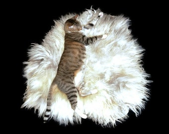 Cat Bed - Felted Wool Fleece Rug - Navajo Churro White Silver - Supporting US Small Farms - Not a Sheepskin - Better