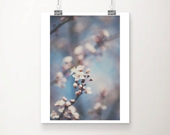 apple blossom photograph white flower photograph tree photograph spring photograph nature photography floral print blossom print