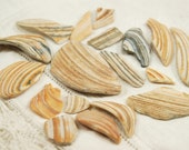 18 smooth colorful clam shell pieces (no.62)
