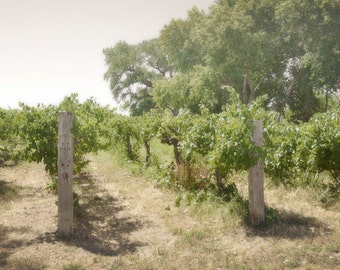 Vineyard Photography Print 12x18 Fine Art New Mexico Rustic Field Trees Southwest Farm Summer Landscape Photography Print.