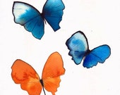 """butterfly trio orange,  blue and white 8 X 10"""" original watercolour painting"""